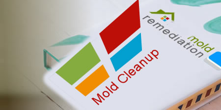Allerton mold remediation